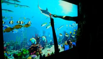 Tambah Alat Peraga Berbasis Augmented Reality (AR), Taman Pintar Sasar Generasi Millenial